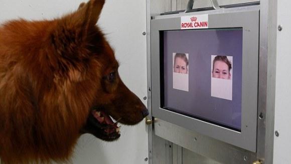 Supărat sau fericit? Câinii deosebesc emoțiile umane doar uitându-se la fotografii