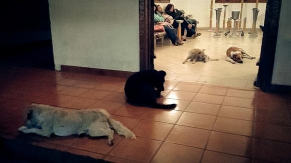 Momente emoționante la înmormântarea unei femei din Mexic. Câțiva câini vagabonzi au venit să își ia adio de la cea care i-a hrănit în timpul vieții