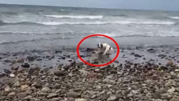 Câinele-erou: a salvat un pui de delfin eşuat pe plajă – VIDEO