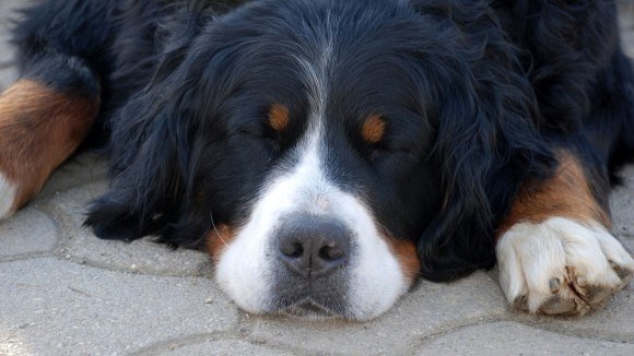 Cum se schimbă comportamentul câinelui tău, odată cu vârsta?