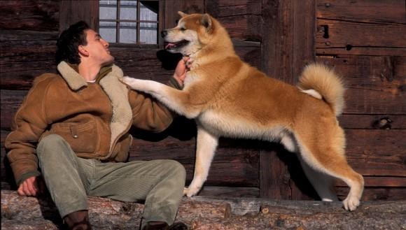 Legătura afectivă dintre câini şi oameni ar putea avea rădăcini genetice