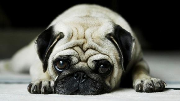 Lucruri neplăcute pe care le face adesea câinilor. Vor ajunge să nu ne mai iubească deloc