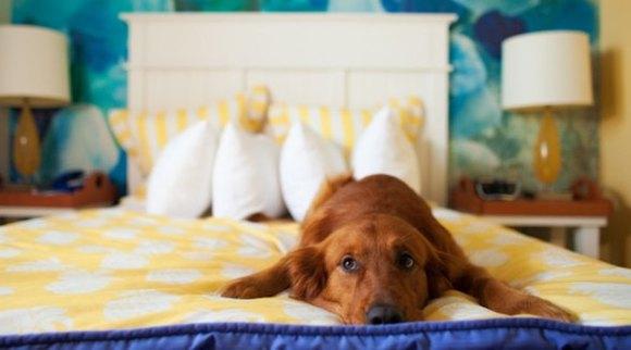 9 gesturi pe care le fac adesea câinii noştri. Ce vor să ne transmită