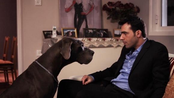 Ce îi determină pe câini să-i placă pe unii oameni, iar pe alţii nu