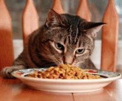 Sa ne hranim corect pisica!
