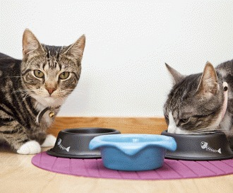 Lipsa poftei de mancare la pisici