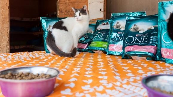 (P) Iubește, hrănește, adoptă o pisicuță alături de PURINA