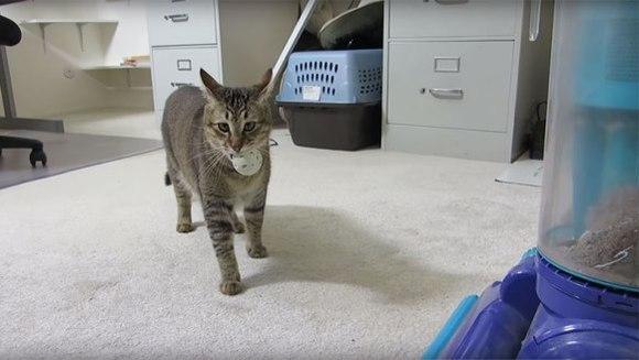 A inventat o mașinărie care obligă pisica să vâneze, pentru hrană - VIDEO