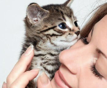 Afectiuni oculare la pisica - Conjunctivita