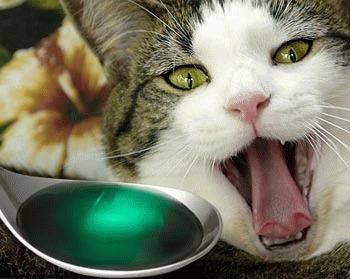 Pisica otravita - ce facem?!