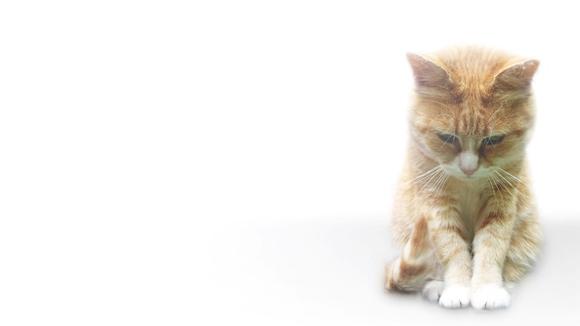 Botulismul la pisici - simptome, diagnostic, tratament
