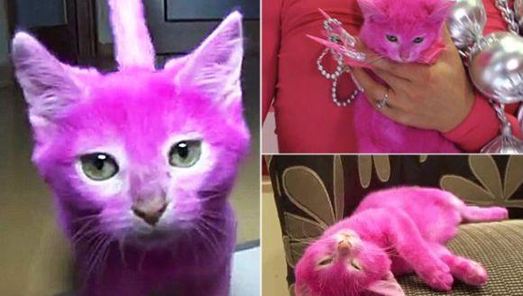 Și-a vopsit pisica roz, pentru o petrecere. Ce s-a întîmplat apoi cu felina a devenit o adevărată dramă