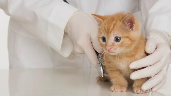 7 întrebări pe care ar trebui să le pui medicului veterinar al pisicii tale