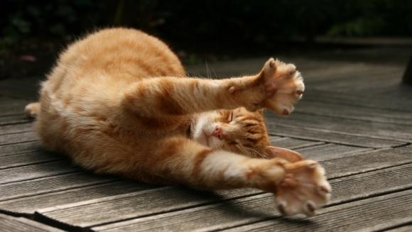 Cum să afli dacă pisica ta e bolnavă – cele 8 semne