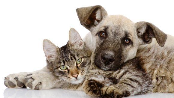 3 motive pentru a-ţi steriliza animalul de companie