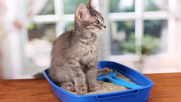 De ce nu îşi mai face pisica nevoile în litieră