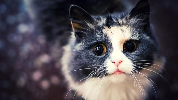 7 lucruri pe care nu ar trebui să i le faci niciodată pisicii tale