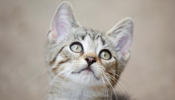 7 lucruri uimitoare care ți se întâmplă, atunci când adopți o pisică