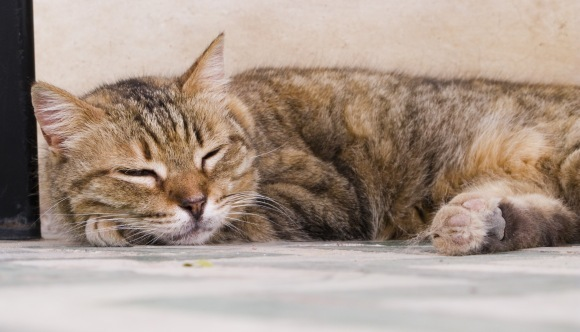 Cinci modalitați incredibile prin care pisica ta se răcorește, pe timpul verii