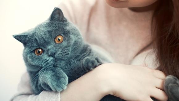 Sfaturi pentru prevenirea cancerului la pisici