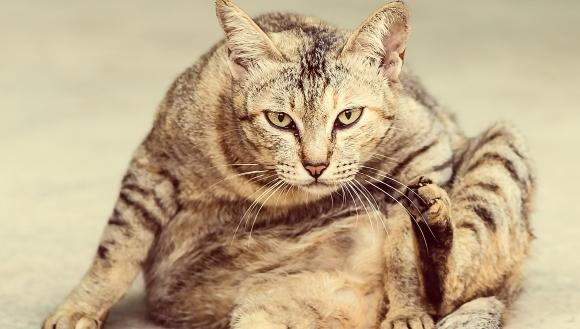 Primăvară? Năpârlirea la pisici! Ce este de făcut şi care sunt cauzele năpârlirii excesive