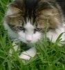 Otravirea pisicii