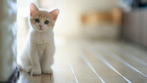 10 motive pentru a iubi pisicile!