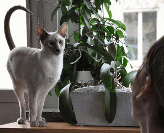 Dragoste de pisica - Afla cum isi manifesta afectiunea pisicile