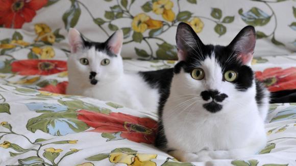 Cele mai frumoase pisici... mustăcioase