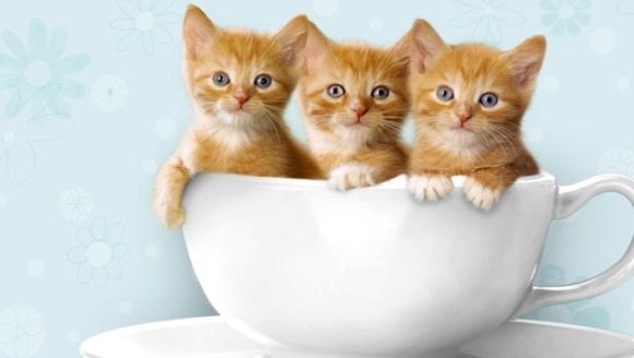 Obiceiurile ciudate ale pisicilor. Ce semnifică ele