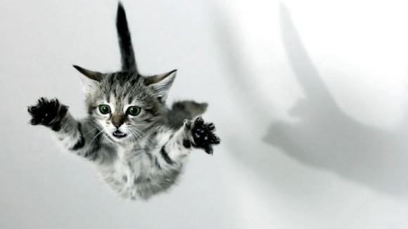 Prinse în acţiune: poze memorabile cu pisici neliniştite