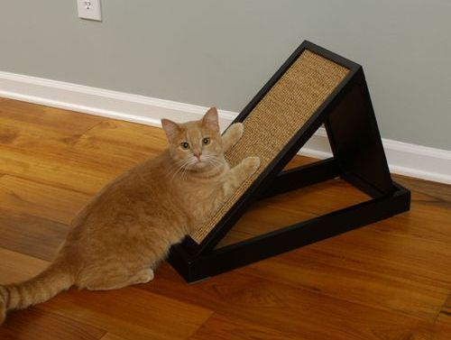 Cum dezvățăm pisica să zgârie mobila?