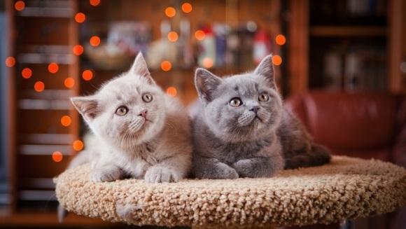 Cum au fost domesticite pisicile