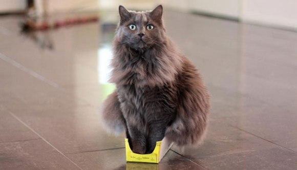 De ce se ascund pisicile în cutii? Noi ipoteze ale cercetătorilor