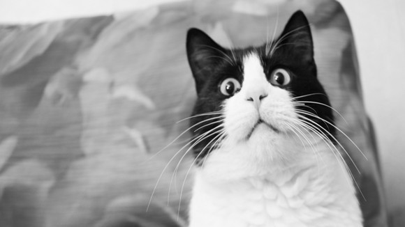 Pisicile și teama de aspirator