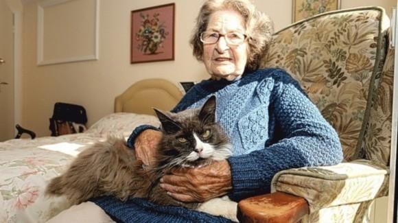Povestea pisicii Cleo care a înduioșat lumea: și-a căutat săptămâni întregi stăpâna trimisă la azil.