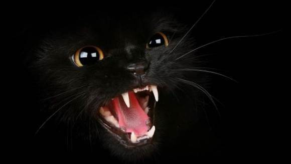 Au sunat la 911, pentru că pisica nu-i mai lăsa să intre în casă
