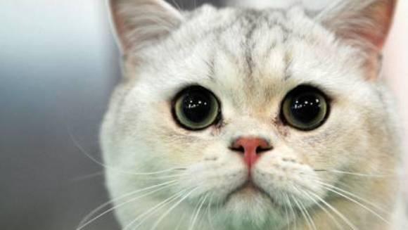 Australienii declară război pisicilor: vor să ucidă două milioane de feline, până în 2020