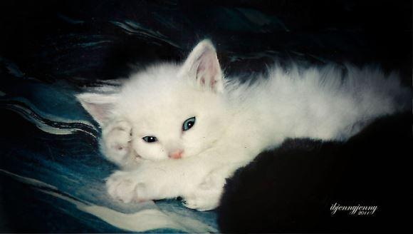 După ce mi-am pierdut băiatul la naştere, pisicuţa aceasta surdă mi-a salvat viaţa - Galerie Foto