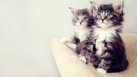 Ce spune pisica pe care ai adoptat-o despre personalitatea ta
