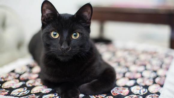 De ce se spune despre pisici că au nouă vieţi?