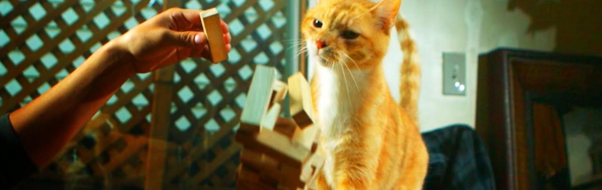 De ce trântesc pisicile obiectele de pe masă?