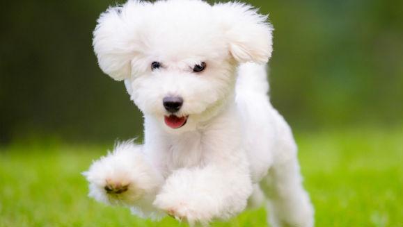 Ce nu ştiai despre câini