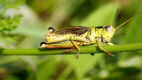 10 lucruri fascinante pe care nu le ştiai despre gândaci