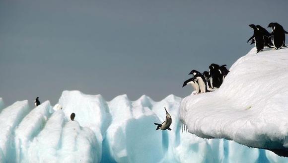 10 lucruri fascinante despre pinguini