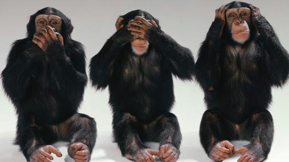 5 comportamente umane pe care animalele le imită măiestuos