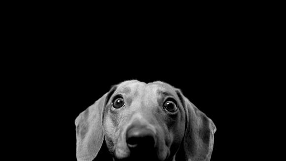 Câinii și teama de artificii și pocnitori