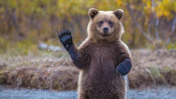 Ştiaţi că…? 20 de curiozităţi despre urşi