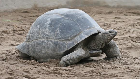 Cât trăiesc animalele – durata de viaţă a necuvântătoarelor