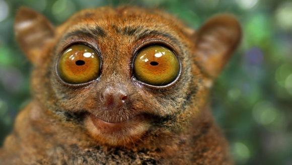 Curiozităţi despre ochii animalelor – Cele mai surprinzătoare fapte – partea a II-a